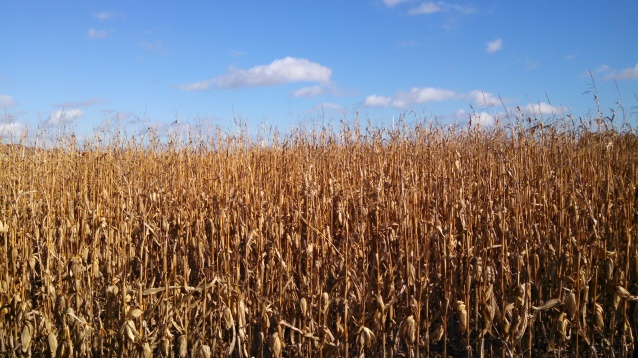 Iowa Corn