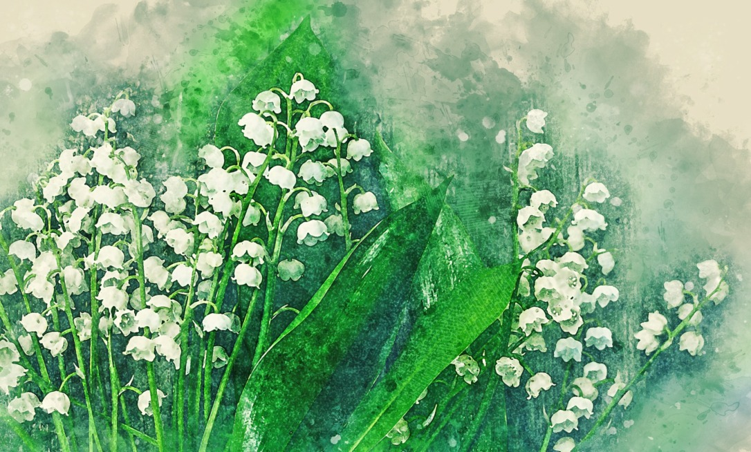 flower-3312233_1920