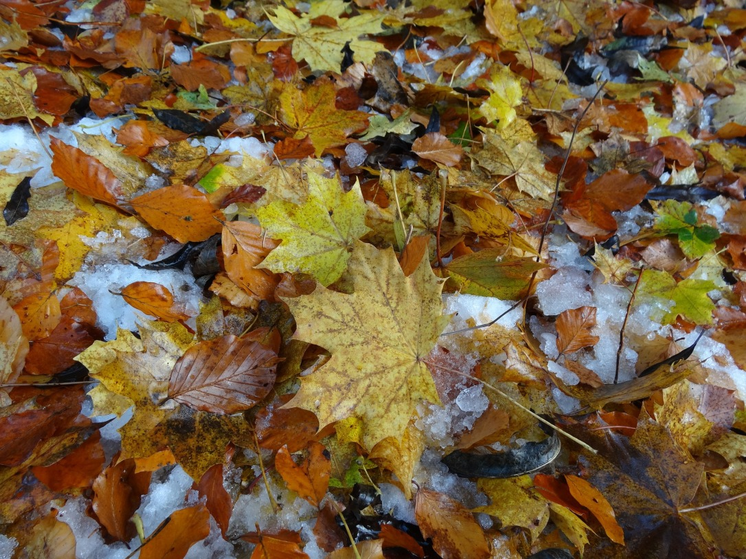leaves-1157652_1920